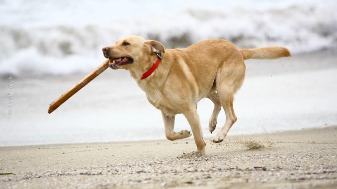 Rennender Hund am Sandstrand