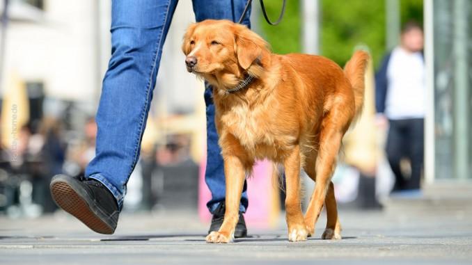 Stsdtspaziergang mit Hund