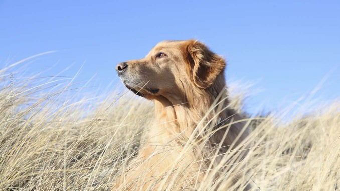 Ferien mit Hund in Italien